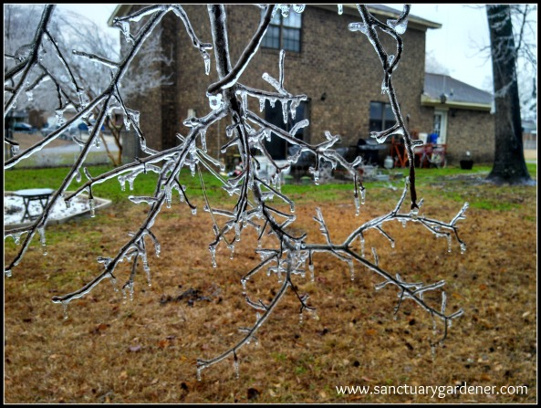 Winter Storm Pax ~ Oak branch and my house
