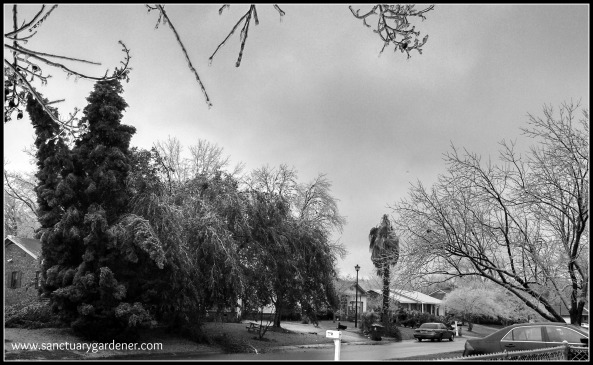 Winter Storm Pax ~ Looking down my street