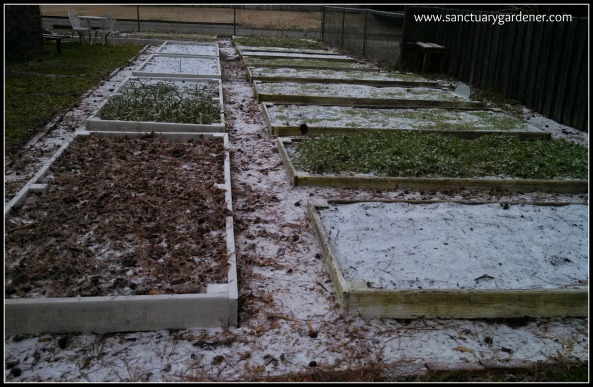 My side beds after Winter Storm Leon