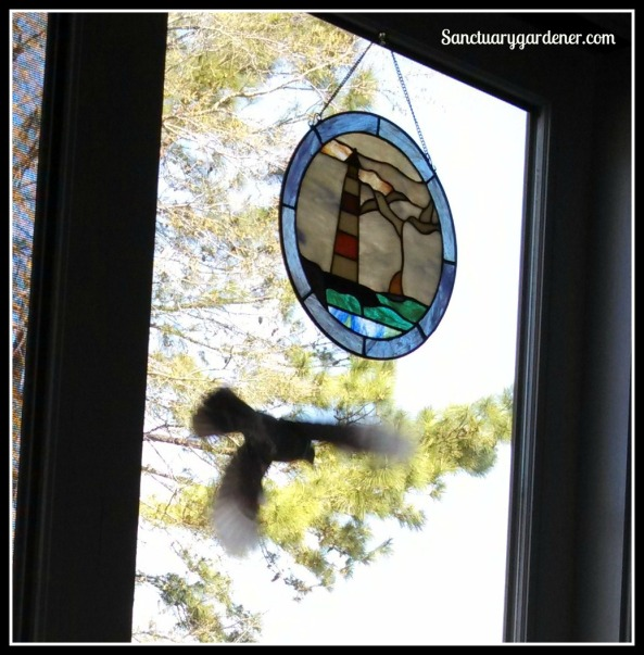 Robin hitting my stained glass seagulls