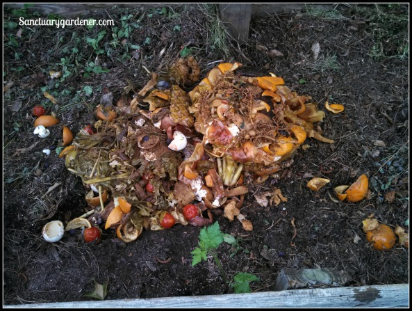Fermented Bokashi scraps in the compost pile