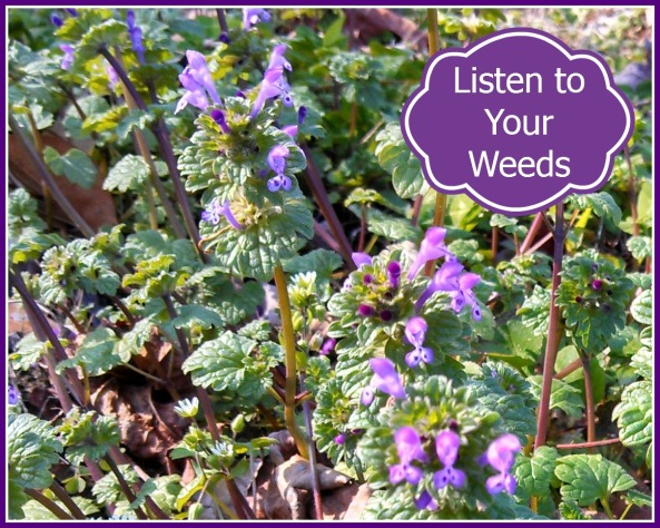 Listen to your weeds pic