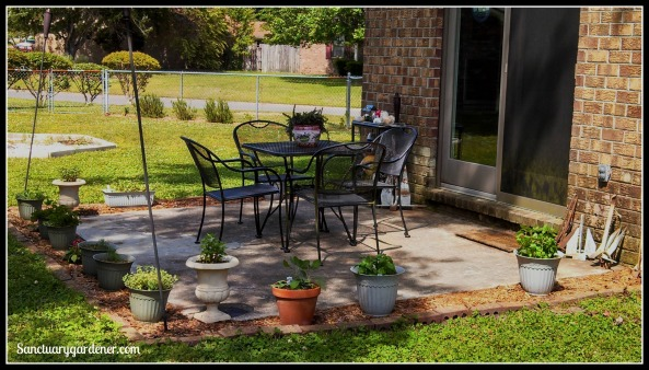 My patio with culinary herbs in pots