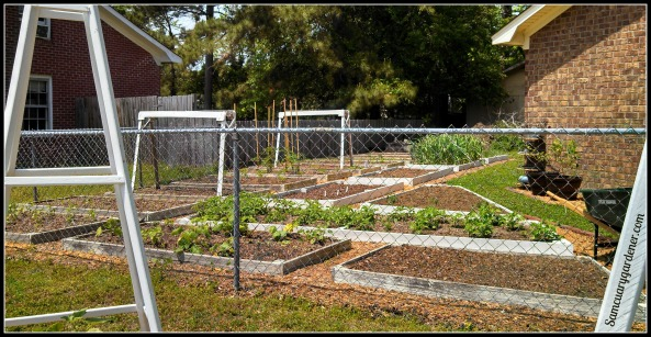 Front view of 18 of my 21 raised beds
