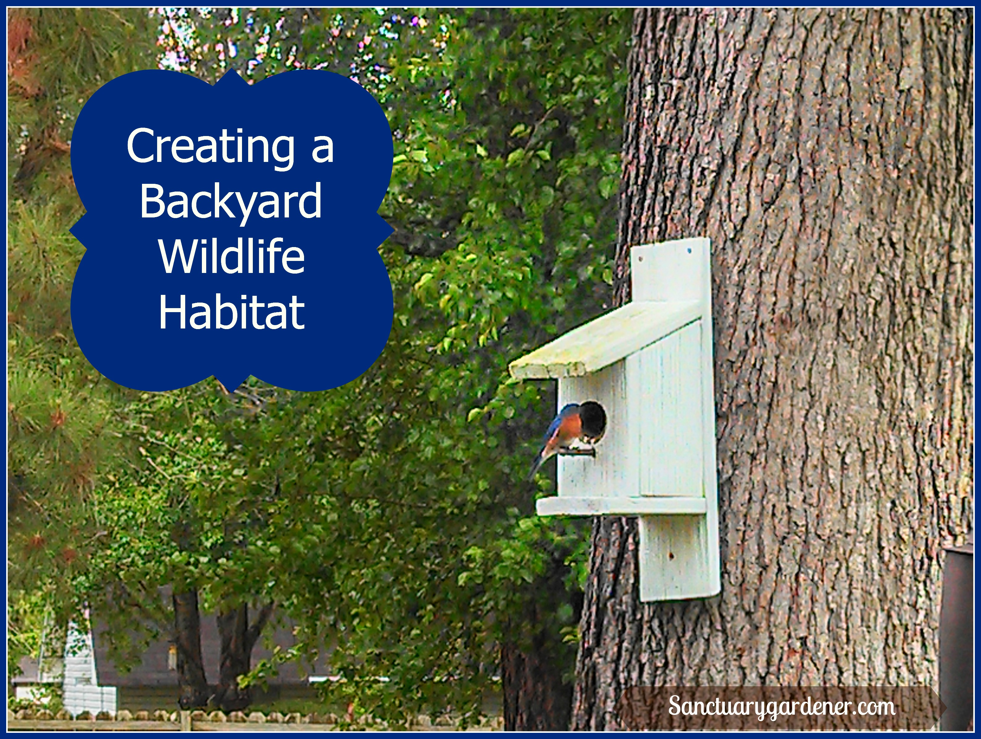 Creating A Backyard Wildlife Habitat