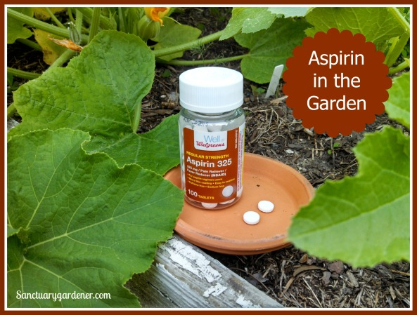 Aspirin in the Garden pic SG
