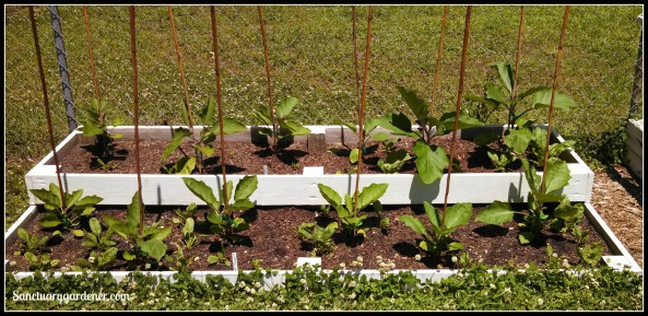 Bed 12x in May ~ Eggplant & Spinach