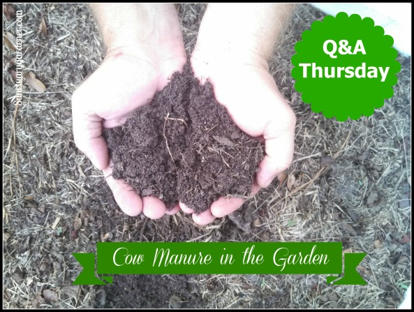 Cow Manure in the Garden Pic