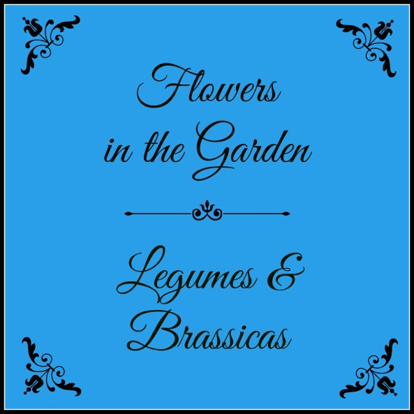 Flowers in the Garden Legumes & Brassicas pic