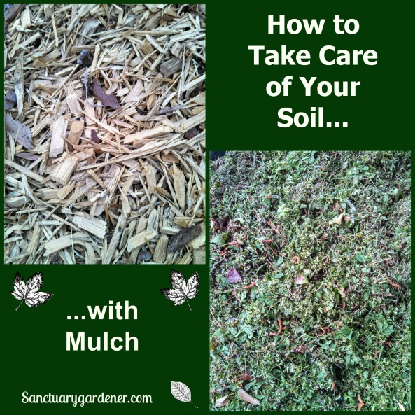 How to take care of your soil with mulch pic