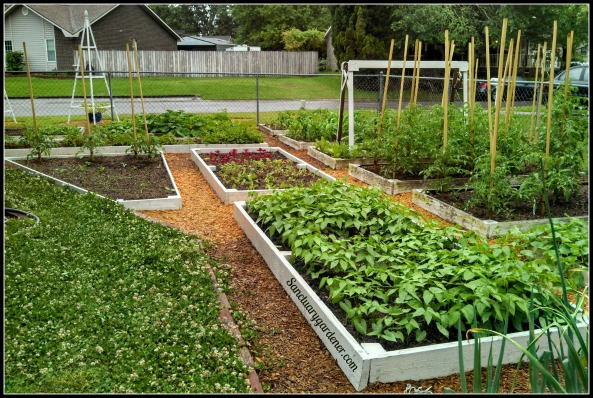My side beds - closeup of the far end