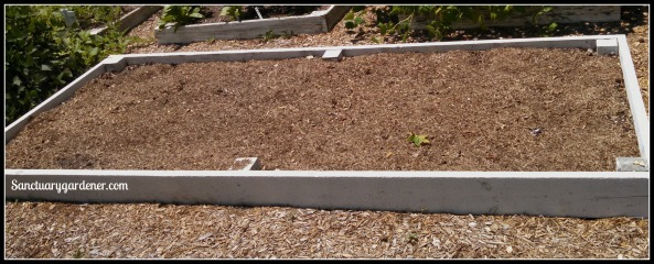 Bed 16 in June ~ Fallow (ready to plant butterpeas)