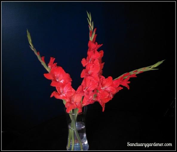 Gladioli in vase