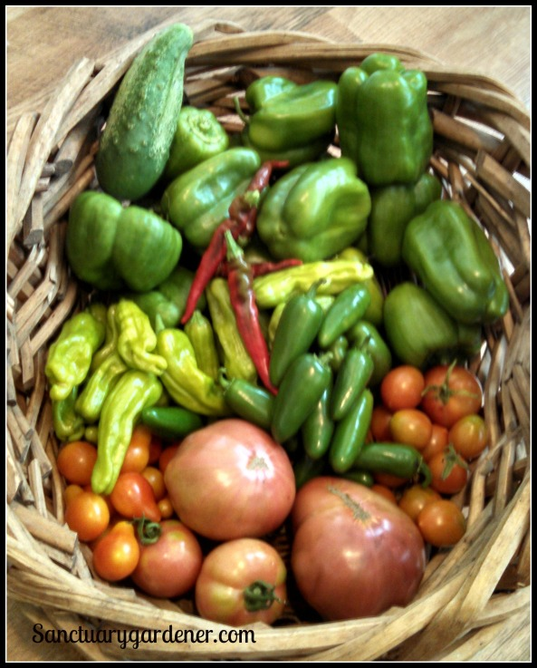 Emerald Giant green bell peppers, jalapenos, Riesentraube cherry tomatoes, Cherokee Purple tomatoes, Mortgage