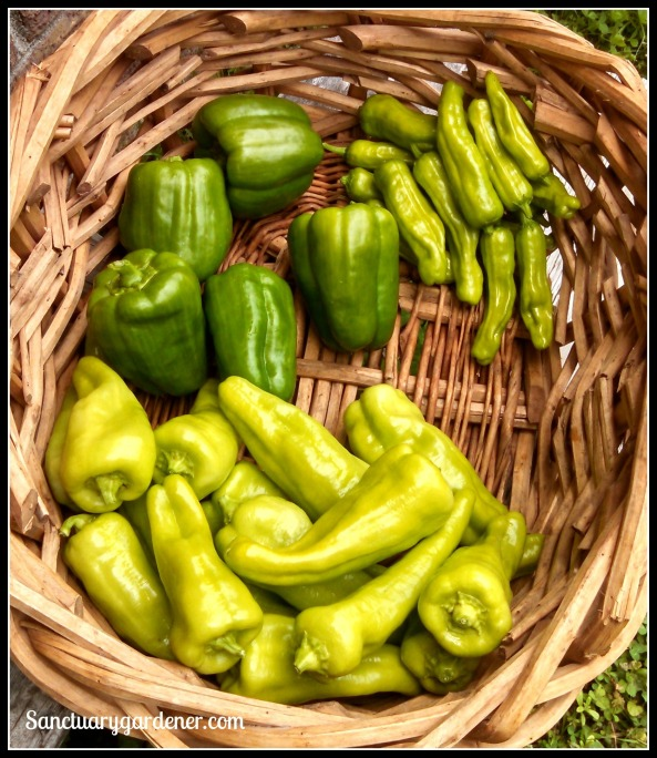 Pepperoncini, green bell peppers, Cubanelle peppers