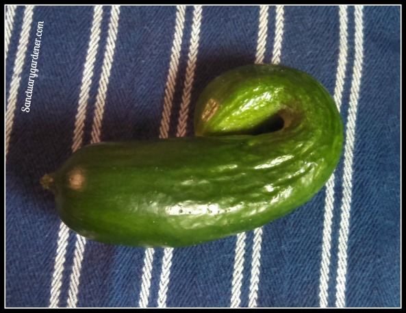 Funky cucumber