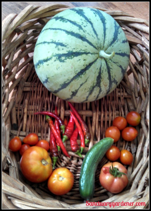 Cream of Saskatchewan watermelon,
