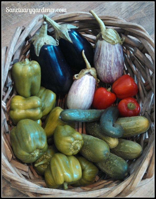 Black Beauty eggplant, Listada de Gandia eggplant, red bell peppers,