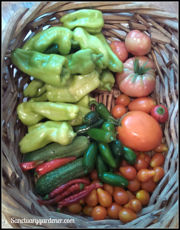 Cubanelle peppers,