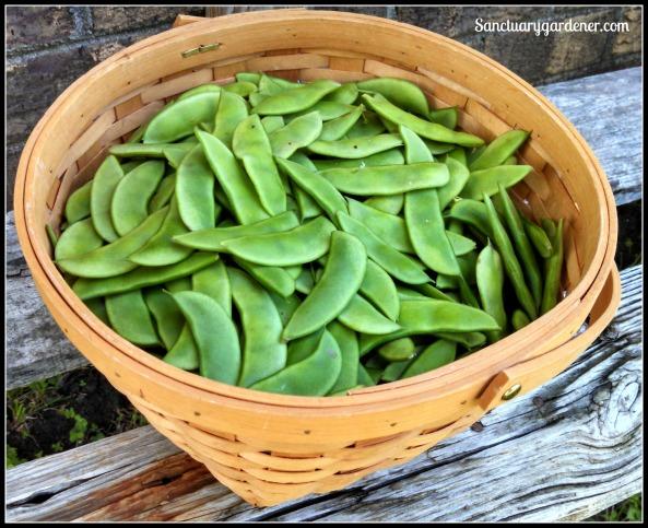 Henderson lima beans