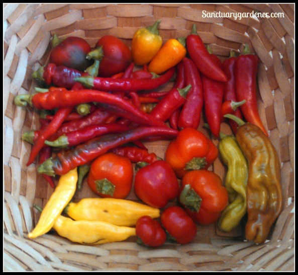 Peppers:
