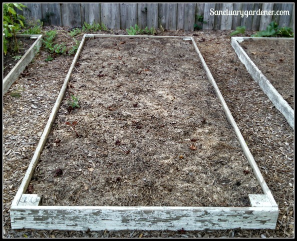 Bed 10 in August ~ Fallow, waiting for brussels sprouts & kale