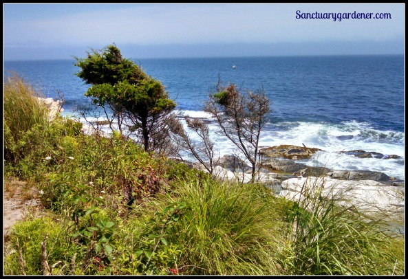 Garden by the sea at Beavertail Lighthouse, RI