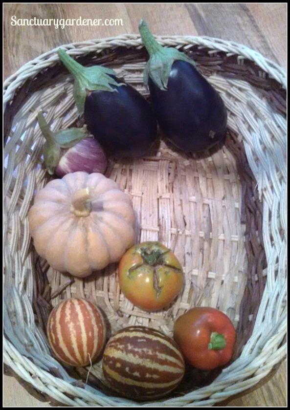 Listada de Gandia eggplant, Black Beauty eggplant, red bell pepper, rich sweetness melons, Wisconsin tomato, Black Futsu squash