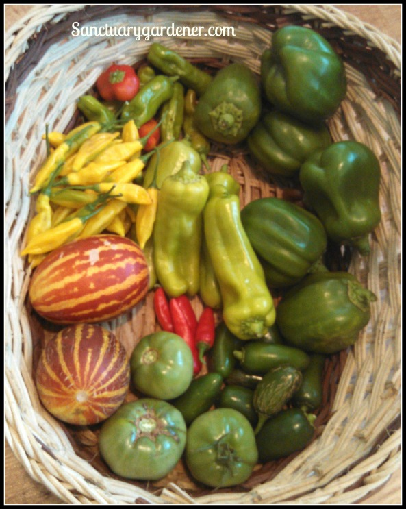 Pepperoncini, Emerald Giant green bell peppers, jalapenos,