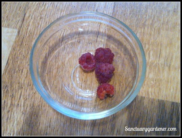 Caroline Everybearing raspberries