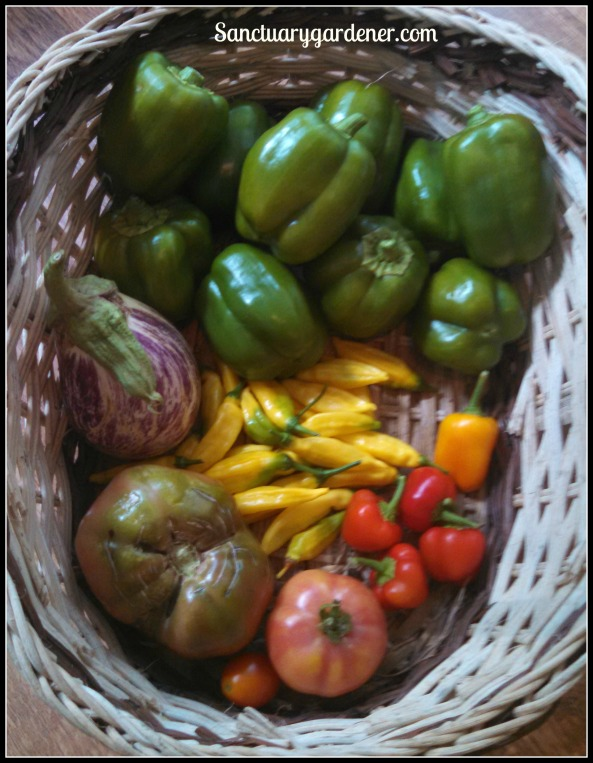 Emerald Giant green bell peppers, mini yellow stuffing peppers, mini red bell peppers, Mortgage Lifter tomato, Riesentraube tomato, Black Krim tomato, Listada de Gandia eggplant. In the center: lemon drop peppers