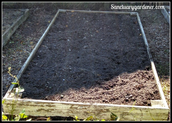Bed 7 in September ~ Fallow, awaiting radishes & turnips