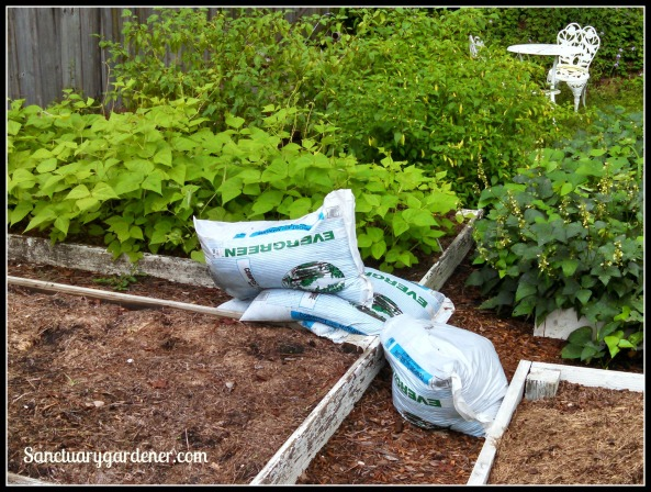 Cow manure compost for the garden