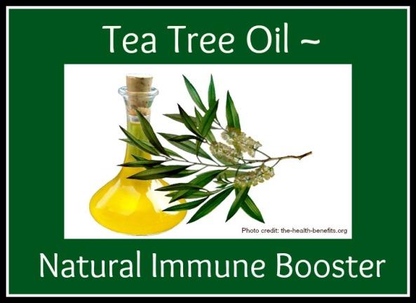 Natural Immune Boosters Tea Tree Oil Sanctuary Gardener