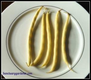Beurre de Rocquencourt wax beans