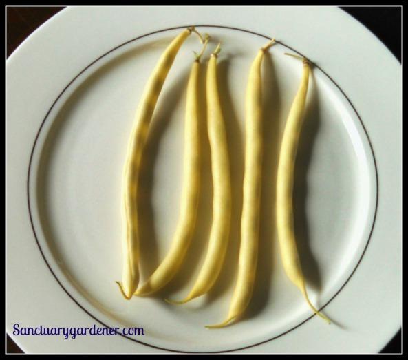 Beurre de Rocquencourt beans