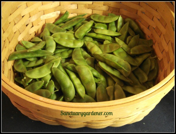 Dixie speckled butter peas