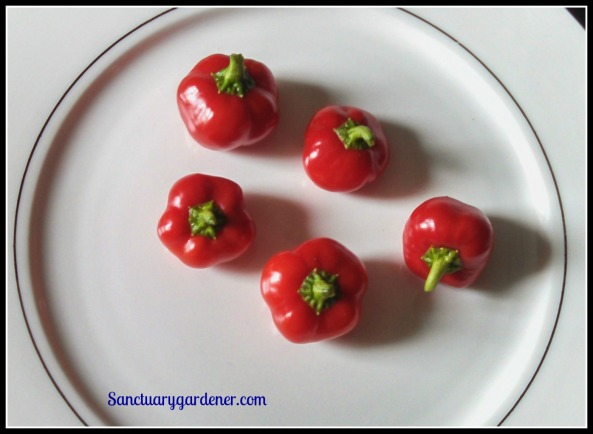 Mini red bell peppers