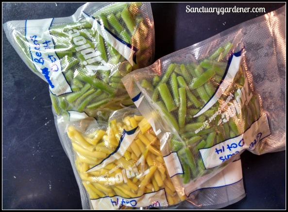 Snap beans ready to freeze