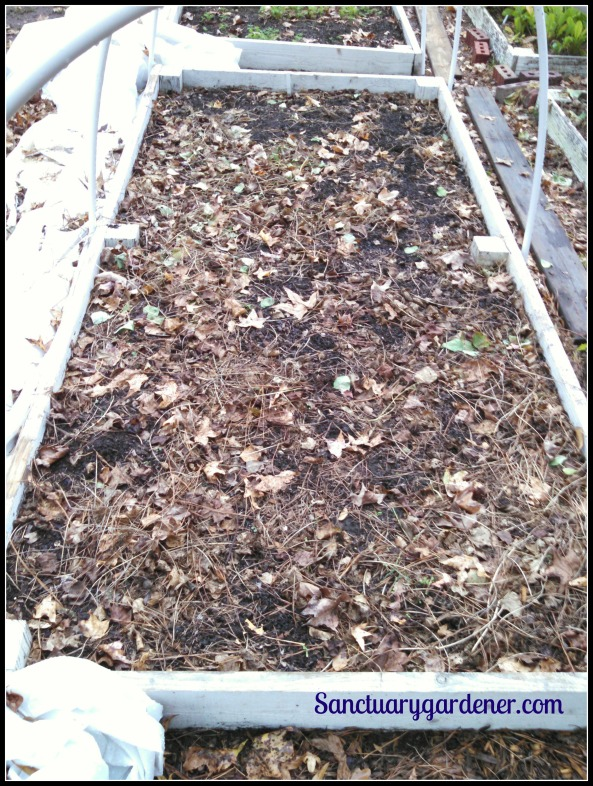 Bed 15 in November ~ Fallow, awaiting lettuce & spinach seed