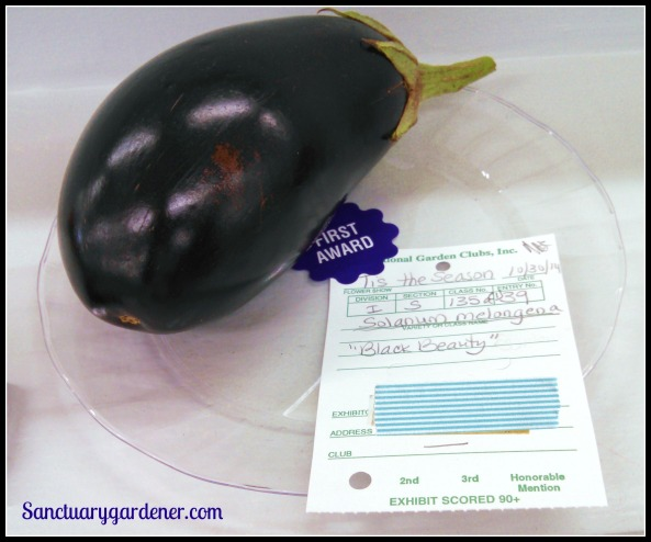 Black Beauty eggplant - First place