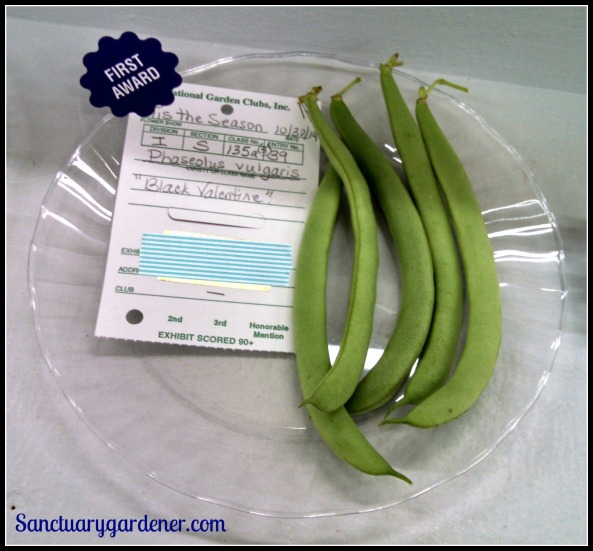 Black Valentine green beans - First place