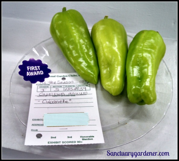 Cubanelle peppers - First place