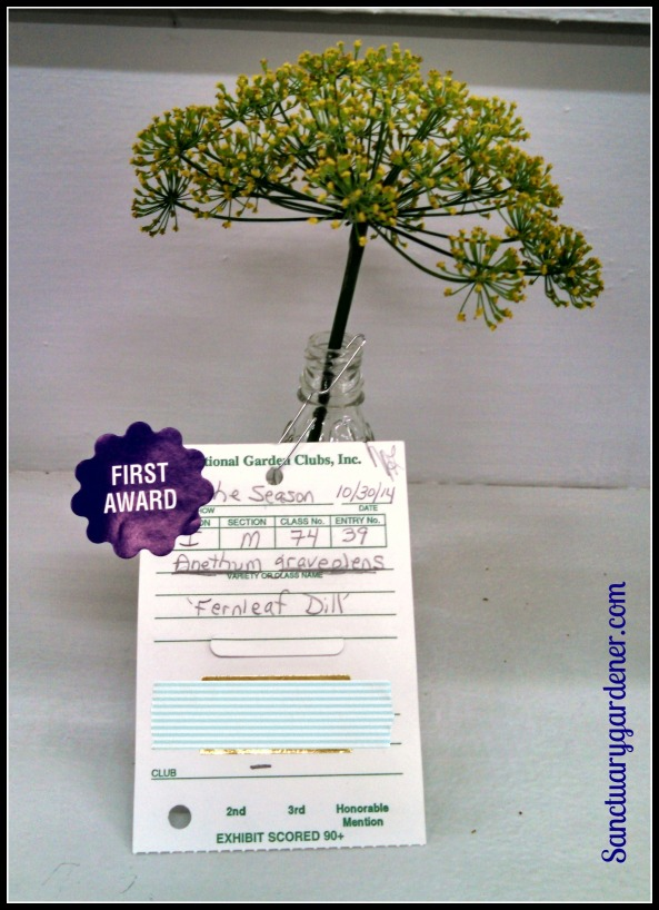 Fernleaf dill - First place