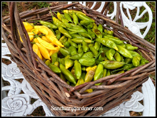 Lemon drop peppers