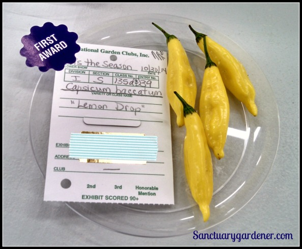 Lemon drop peppers - First place
