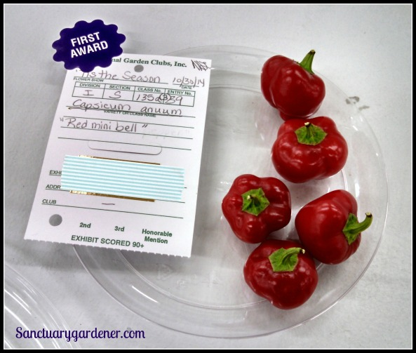 Mini red bell peppers - First place