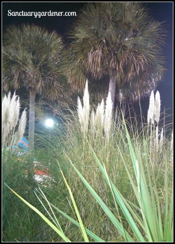 Pampas grass & palmetto trees at the fair