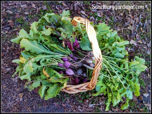 December harvest basket