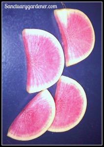 Watermelon radishes cut